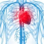 Exploring the Epidemiology of Diabetic Heart Failure
