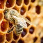 Lo que debe saber sobre los neonicotinoides y la UE